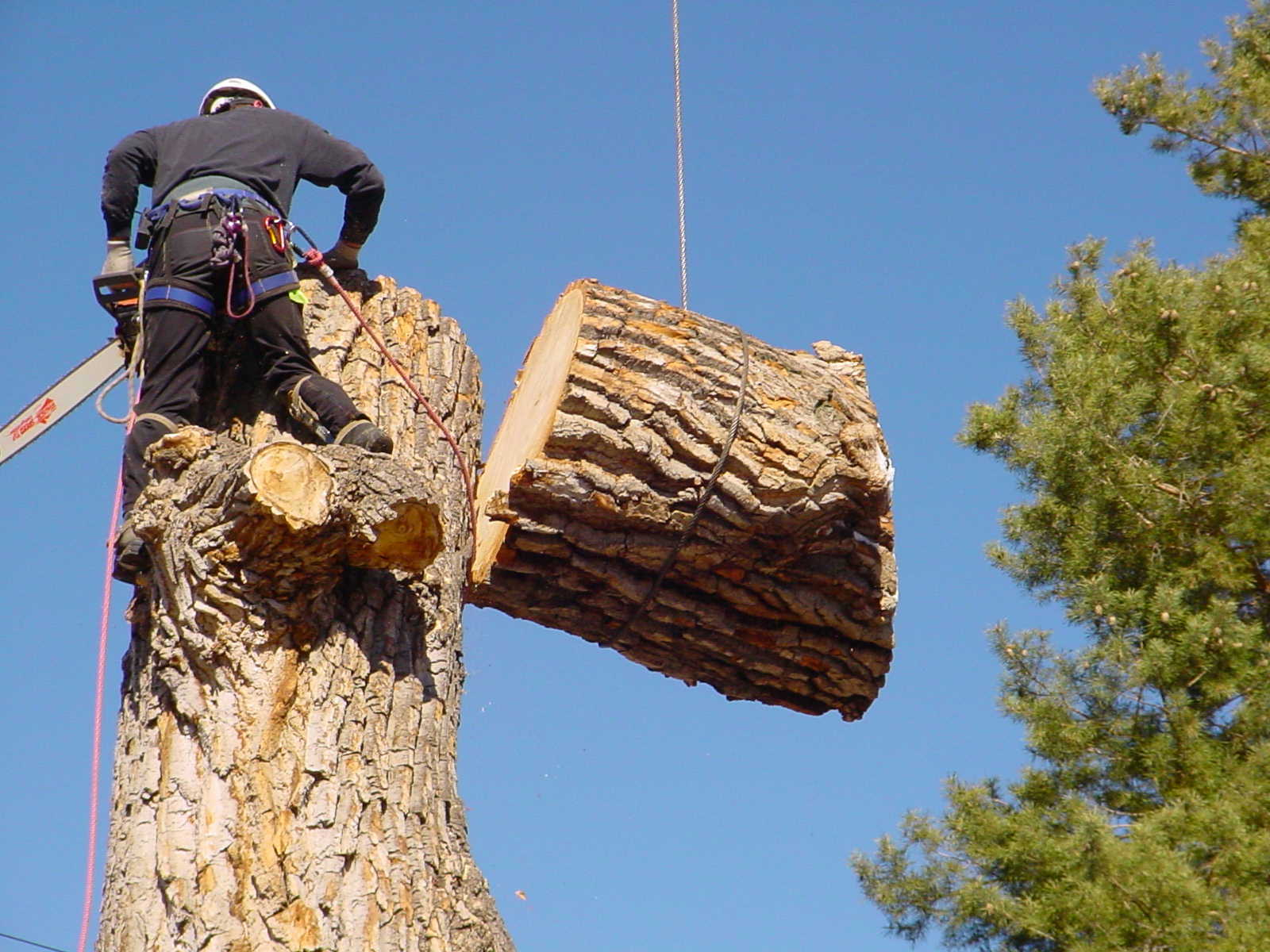 Fast Tree Removal Service in Tealstone Ray Ranch Chandler AZ